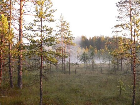 We can easily feel ourselves — as spiritual hearts — over the Radek's lake covered with soft morning mist.